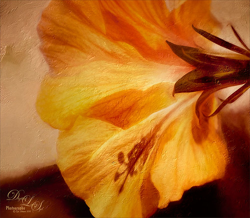 Image of a Yellow Hibiscus Blossom with a touch of a Tuscan Feel