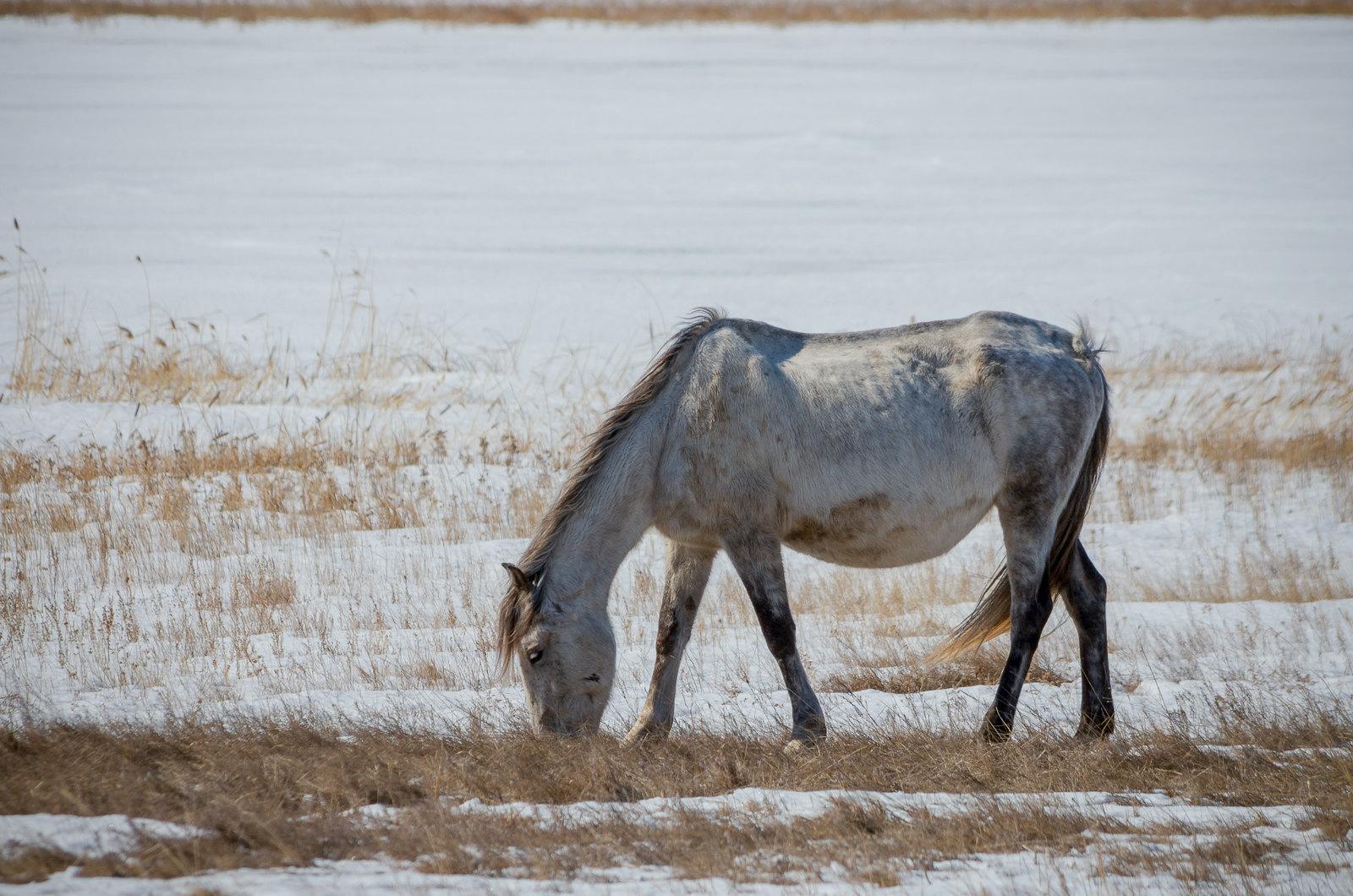 Зимняя лошадь