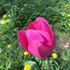 Petals #garden