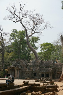 Ta Prohm temple with tree growing out of it!