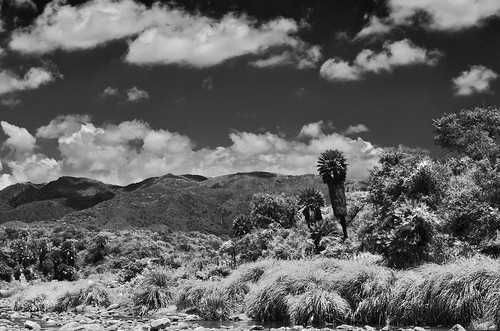 Autor: Eduardo Regner
