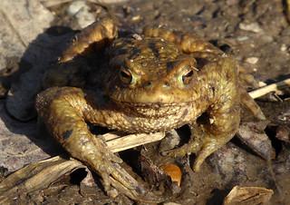 Amphibienzeit