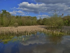 Early Spring at Davyhulme Nature Millenium Reserve near Urmston, Manchester, England - April 2015
