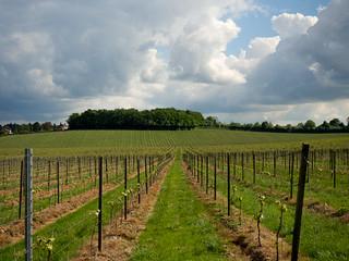 Denbies Wine Estate