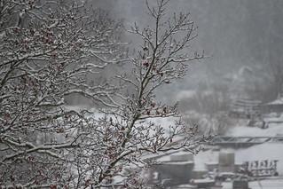 snö i dag