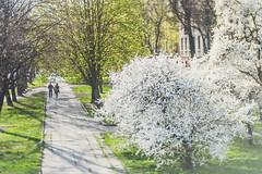 Spring Walking   Kaunas, Lithuania#113/365