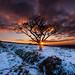 Winter sunset by snowyturner