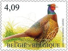 17bis Faisan Recommandé timbre