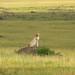 Oloololo Gate, Masai Mara  (63) by Axel Köhler