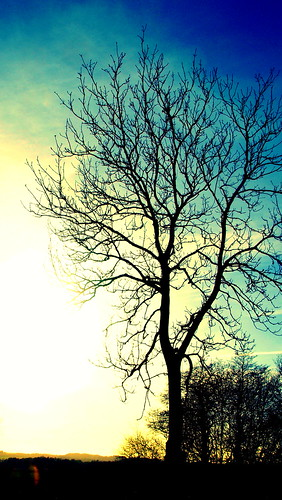 trees sun tree sol silhouette garden denmark spring træer træ olympus have ash sillouette danmark forår e510 hjeds asketræ