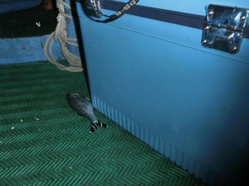 17度C環島-蘭嶼飛魚季體驗- (12)