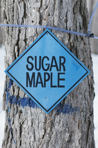 At the sugar bush