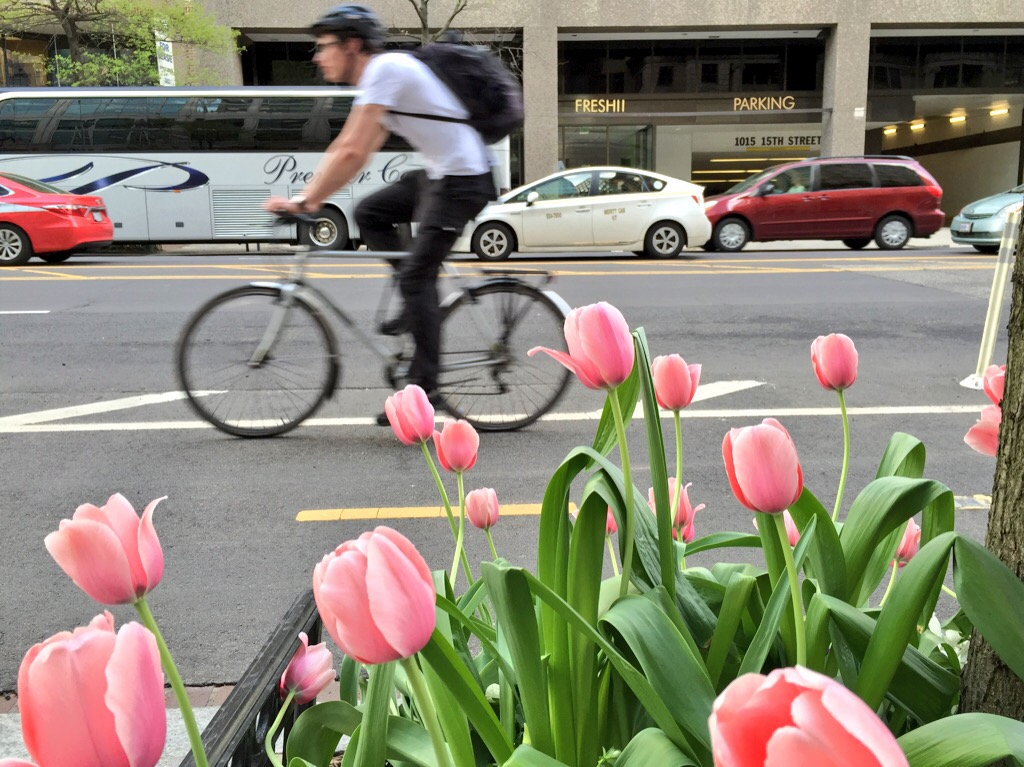 15th St Cycletrack is now a tulip-track