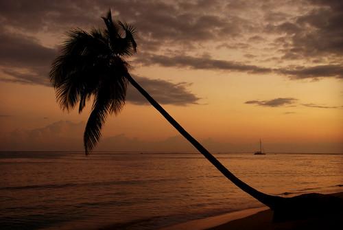 morning sea beach water silhouette dominicanrepublic playa palmtree catamaran republicadominicana lasterrenas