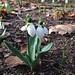 63-365 Spring has sprung! by kmardahl
