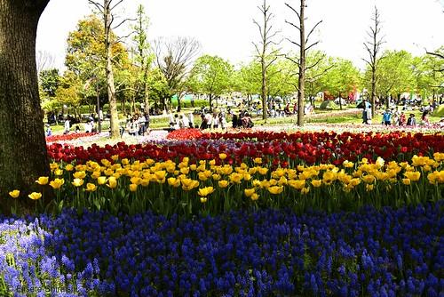 planta japan nikon flor paisagem jardim tulipas campo japão koen gifu nihon 公園 木曽三川公園 coresvivas kisosansenpark canteirodeflores aoarlivre kaizucho kaizushi nikond750