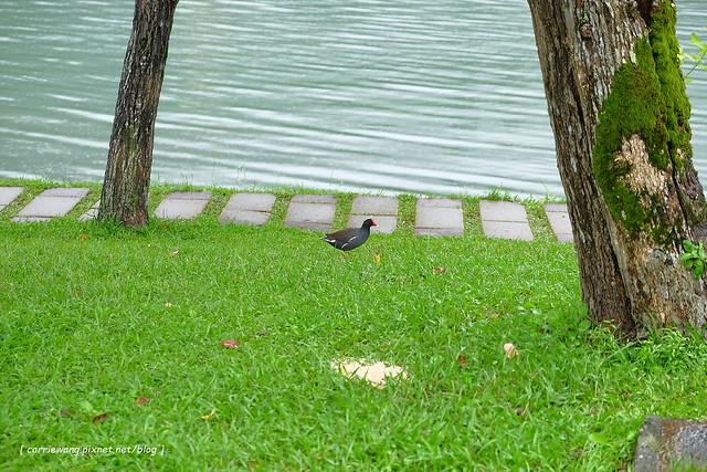 梅花湖 (24)