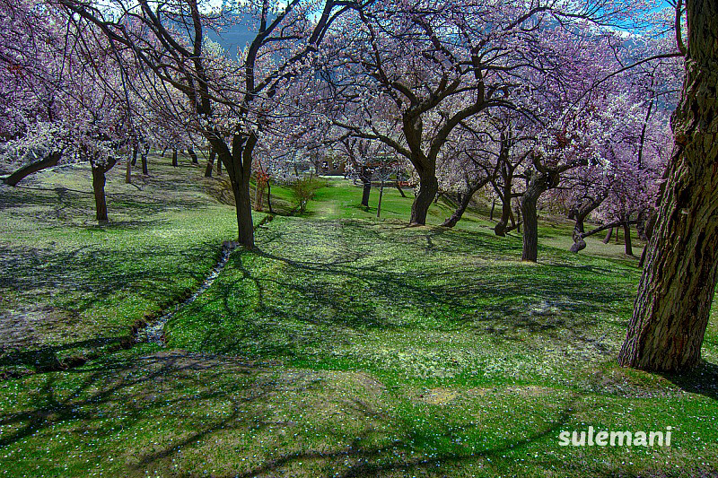 spring at hunza