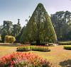 , Peradeniya Botanical Gardens, Kandy
