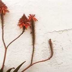 Cactus sobre pared blanca