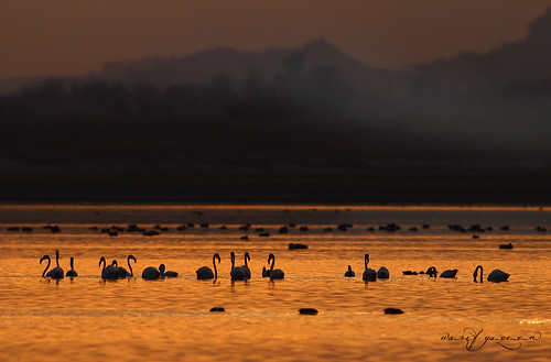 pakistan sunset nature wildlife flamingos animalplanet nationalgeographic wasif wasifyaqeen flamingossunset