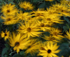 ICM flowers and plants