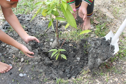 地球日南投信義鄉地利國小布農小朋友種下民族植物守護地球。