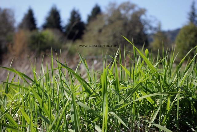 IMG_0048grass