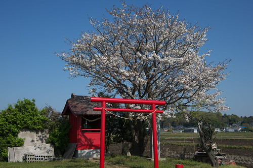 Tsukada shrine (塚田稲荷)