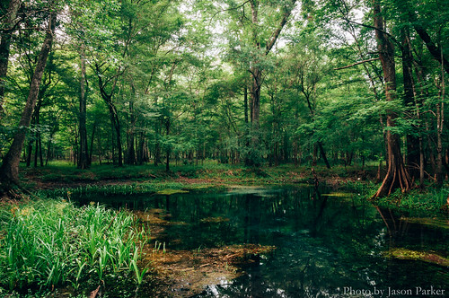 longexposure wild summer santafe color nature water forest swimming spring woods colorful florida johnson scenic naturalbeauty polarizer northflorida bluesprings polarizingfilter santaferiver highsprings floridaspring gilchristcounty vsco springhunters vscofilm gilchristbluespring johnsonspring