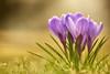 Photo:Spring has come around By chibitomu