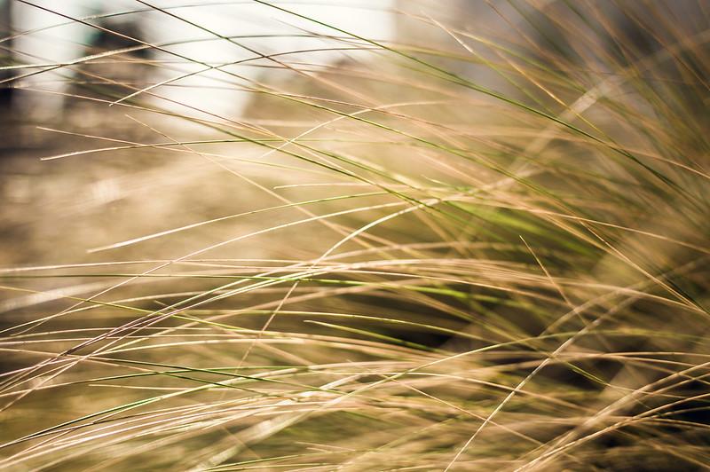 Les graminées reprennent de la couleur ( Grasses Colors )