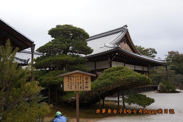 日本京都金閣寺15