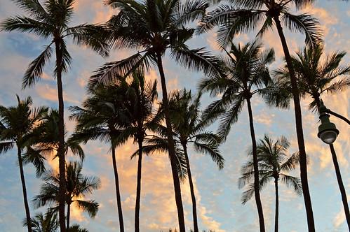 sunset sky clouds hawaii nikon waikiki oahu monk palmtrees kapiolanipark nikond3200 yabbadabbadoo d3200