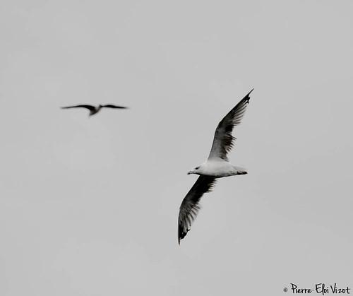 Birds in the sky - 2014