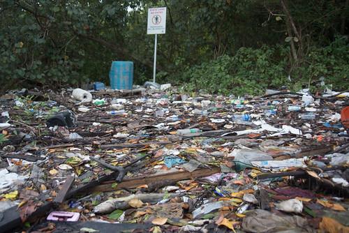 Dead fishes and trash at Lim Chu Kang Jetty, 8 Mar 2015