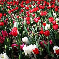 Un giorno di primavera