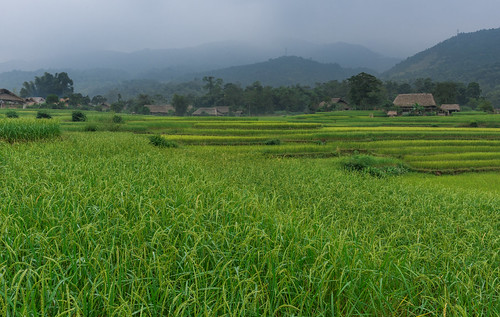geotagged village vietnam ricefield hagiang tphàgiang