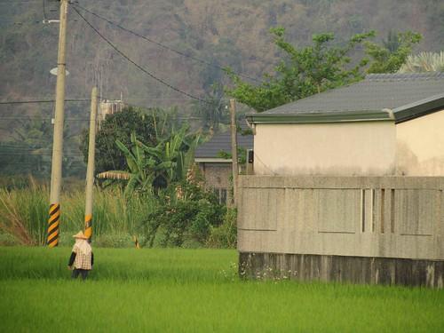 農舍有個明顯的特徵-高大的圍牆。都市人來農村蓋豪宅,卻又用圍牆把自己圍在農村之外。攝影:李慧宜