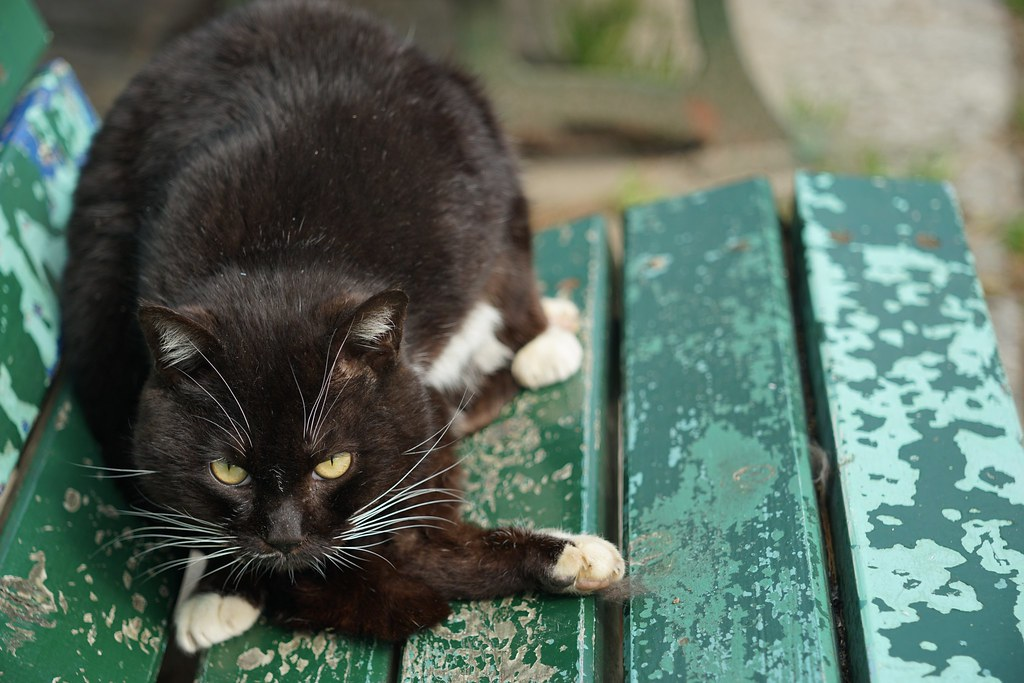 A cat in Mejo park 2015/03 No.3.