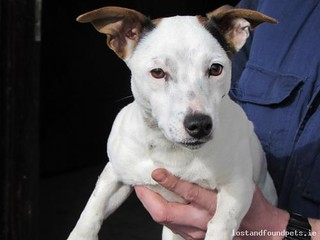 Tue, Mar 31st, 2015 Found Female Dog - Scramogue Manor, Roscommon