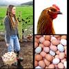 #WildChickFarm is back in action. #Spring is here, and so is #Arcata #FarmersMarket, back @ArcataPlaza ~ Saturday, 9am-2pm ~ HumFarm.org