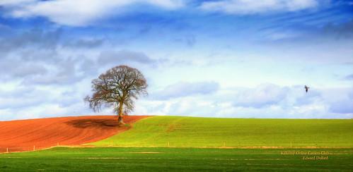 My favourite tree.