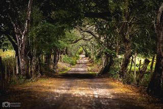 Camino rural Nogueras, Colima, México.
