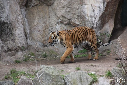 Oster-Montag im Zoo Berlin 06.04.201535