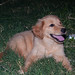 Small photo of Molly 1st night home