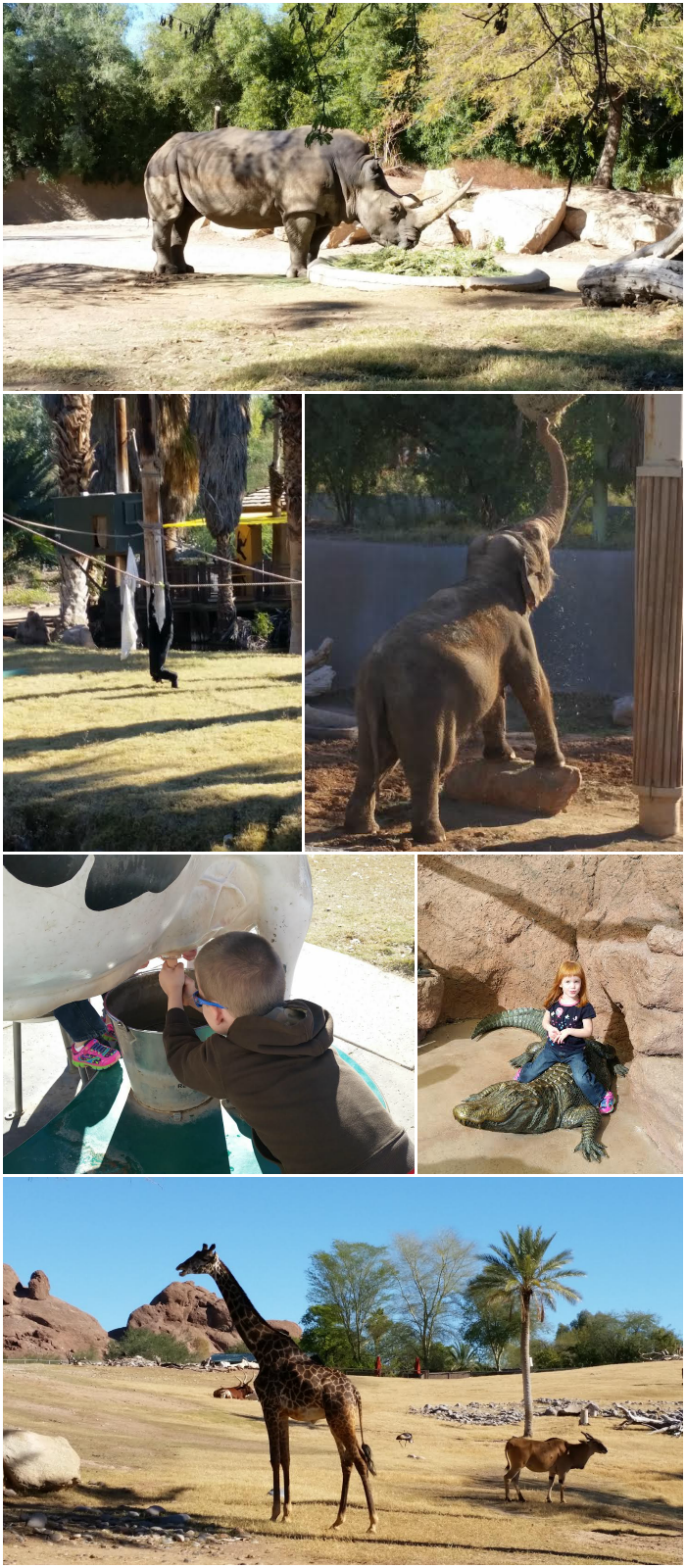 Zoo Collage
