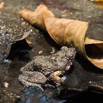 Sa, 28.03.15 - 11:48 - Froggy