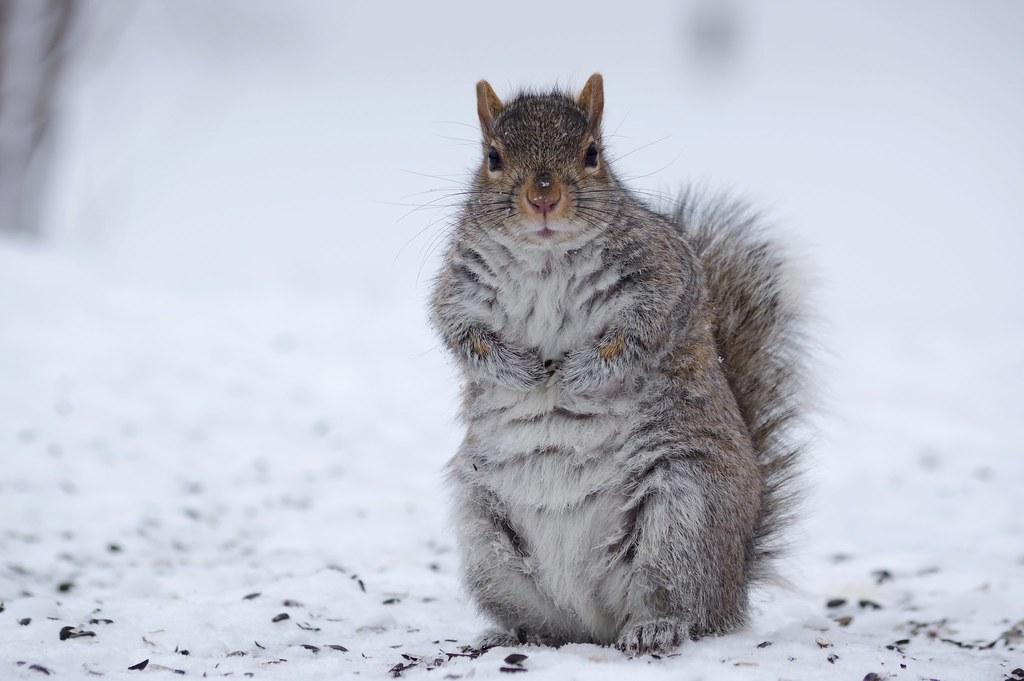 Squirrel Eye Contact
