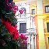 #flowers #spain #spanish #pinkflowers #closeup